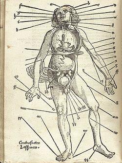 Points for bloodletting Hans von Gersdorff, Field Book of Wound Medicine, 1517.