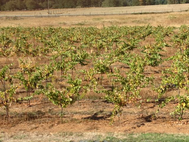 Dry Viticulture